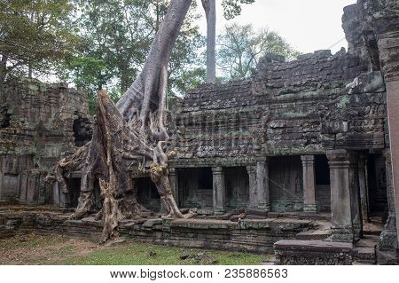 Big Tree Root Combine With Ancient Stone Balcony At Preah Khan The Stone Temple In Angkor The World