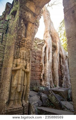 Carving Of Giant For Entrance Guard With Tree Root On Wall Background At Preah Khan The Stone Temple