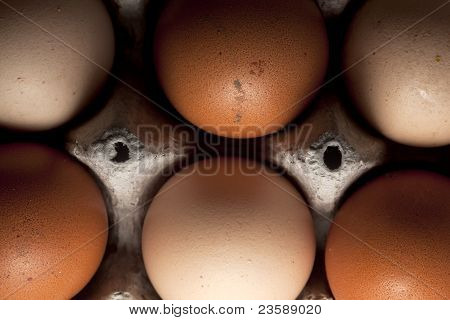 Home-farmed organic eggs
