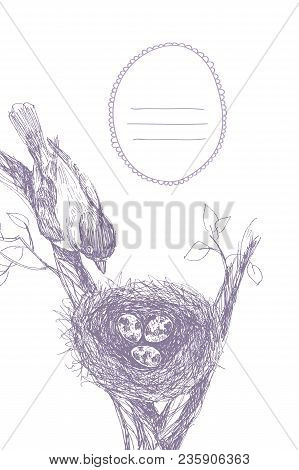 Bird Nest. Robin Nest, Eggs And Feathers. Hand Drawn In Illustrator With Charcoal Brushes To Create
