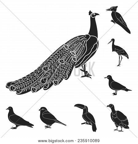 Types Of Birds Black Icons In Set Collection For Design. Home And Wild Bird Vector Symbol Stock  Ill