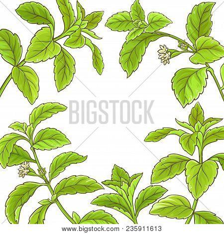 Stevia Branch Vector Frame On White Background