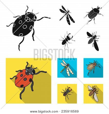 Arthropods Insect Ladybird, Dragonfly, Beetle, Colorado Beetle Insects Set Collection Icons In Black