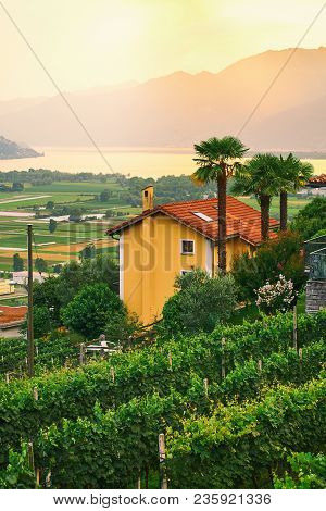 Sunset View Of Rural Southern Switzerland With Houses, Farms, Vineyards, Alps Mountains And Lake Mag
