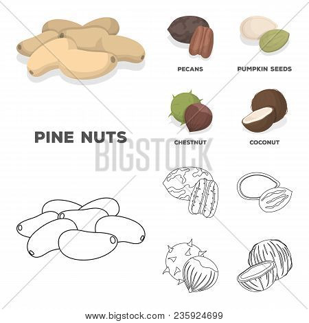 Pecan, Pine Nut, Pumpkin Seeds, Chestnut.different Kinds Of Nuts Set Collection Icons In Cartoon, Ou