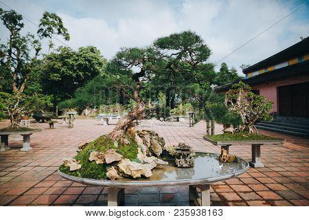 Bonsai Tree And Decorative Pond In Hue, Vietnam
