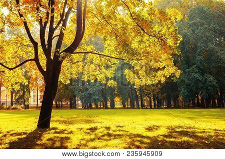 Autumn Landscape Of October Autumn Park In Sunny Weather. Spreading Autumn Trees With Fallen Autumn