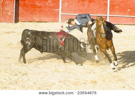 MADRID, SPAIN - SEPTEMBER 10: bullfighter on horseback, bullfight. September 10, 2010 in Madrid (Spain)
