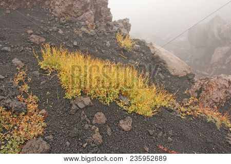Moss On The Etna Volcano. The Etna Volcano Crater. Black Volcanic Earth, Volcanic Lava And Stones.