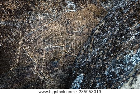 Ancient Prehistoric Drawings Of Various Animals On The Rock. The Remains Of Ancient Civilizations