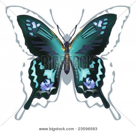 illustration with blue and black butterfly isolated on white background