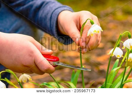 The Boy Holding A Red Knife Cuts Legally Protected Flowers
