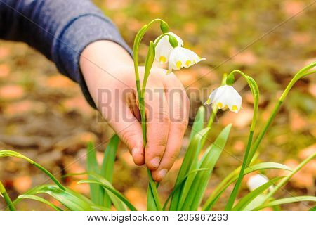 A Detail Of A Hand Busting A Law Protected Flower