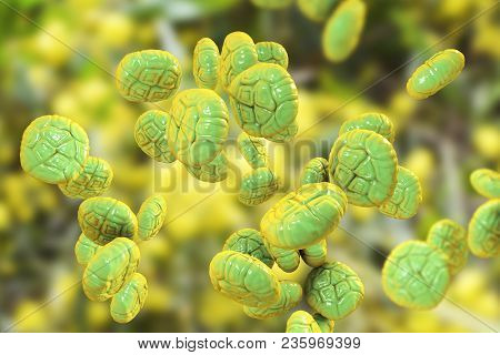Mimosa Pollen, Close-up View, 3d Illustration. Pollen Is A Factor Causing Hay Fever And Allergic Rhi