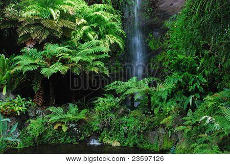 Eden Garden, Aucklan, New Zealand