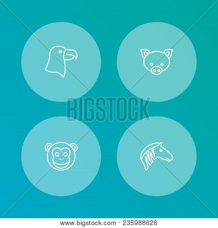 Set of 4 zoo icons line style set. Collection of swine, ape, aquila and other elements. poster