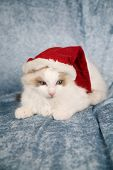 Cute little kitten looking a bit angry with having to wear a santa hat poster