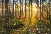 Landscape of spring forest in backlight. Morning rays of sun in frame at dawn in picturesque forest. Natural nature. Sunbeams through trees of woodland. Spring background poster