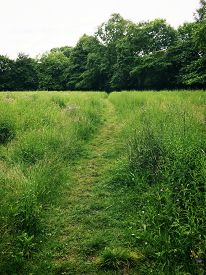 Path Through Field With Tall Grasses And Thick Foliage In The Distance. Taken In Seymour Park, Traff