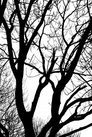 Image Of Trees In The Park Closeup