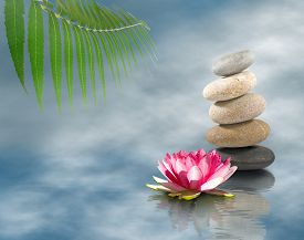 Stones And Lotus Flower On Water Closeup