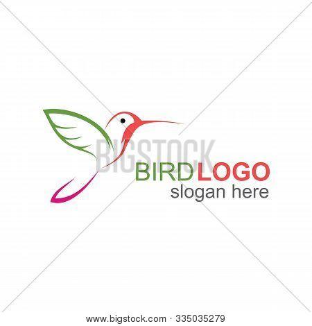 Flying Humming Bird Logo, Cute Little Bird Logo