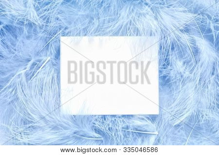 Concept With Soft Cerulean Colored Feathers. Creative Glamour Layout Made Sky Blue Feather. Flat Lay