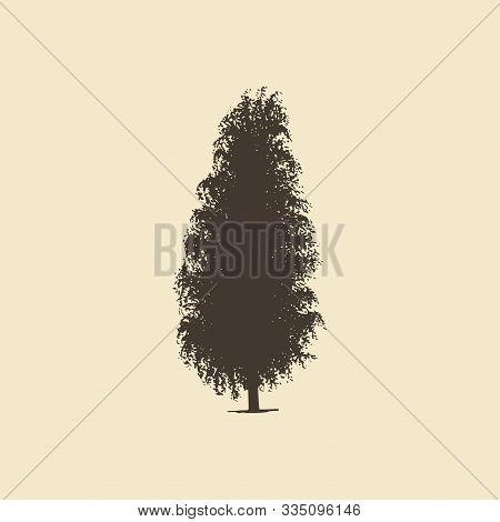 Alder Or Birch, Hand Drawn Silhouette.vector Sketch Of Deciduous Tree.