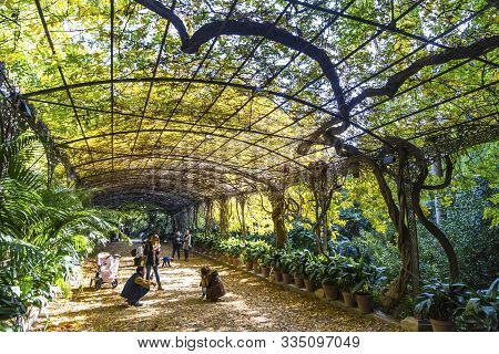 Malaga, Spain - December 10, 2017: Botanical Garden (jardin Botanico La Concepcion) In Malaga. One O