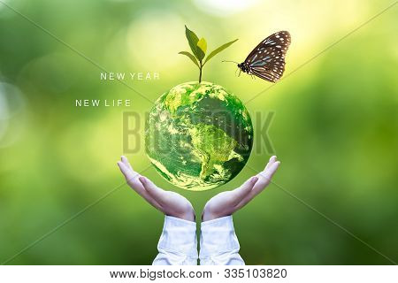 Ecology And Environment Earth.  Planet And Tree With Butterfly In Human Hands Over Green Nature Ecol