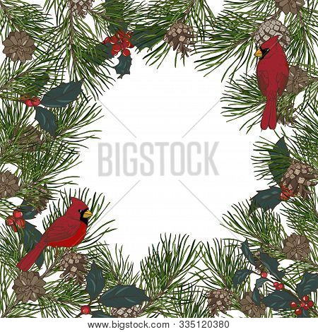 Frame Of Pine Branches And Birds Cardinals, Christmas Plants, Vector Illustration