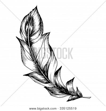 Vector Bird Feather From Wing Isolated. Black And White Engraved Ink Art. Isolated Feathers Illustra