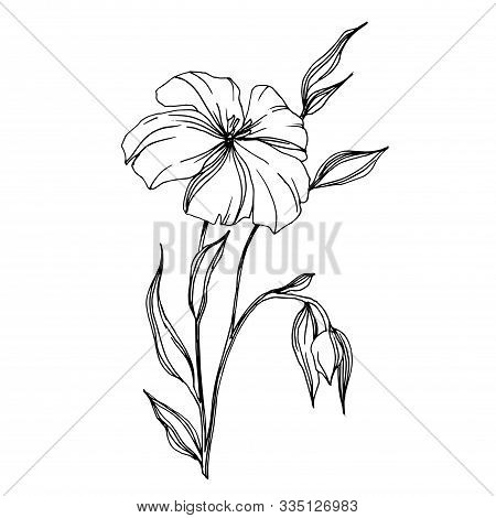 Vector Flax Floral Botanical Flowers. Black And White Engraved Ink Art. Isolated Flax Illustration E