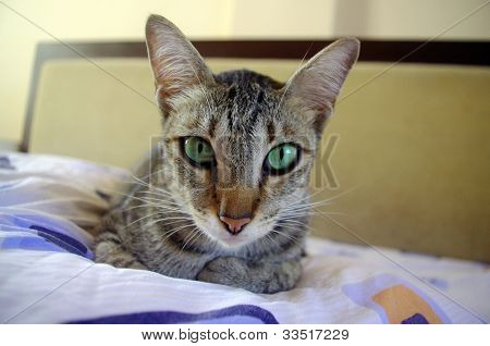 Cat Sitting On Bed