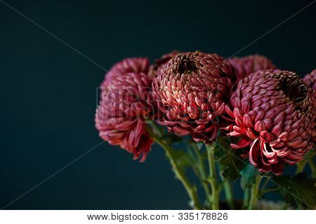 Burgundy Flowers In The Morning Light. Bouquet Of Burgundy Chrysanthemums On The Dark Blue Wall Back