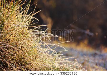 Plants And Grass In Hoarfrost. Glittering In Sunlight Scenery. Sunny Morning In Countryside. Beautif