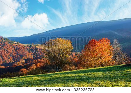 Beautiful Afternoon Autumn Landscape In Mountains. Sunny Weather Gorgeous Sky. Amazing Nature Scener