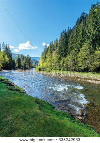 Rapid Mountain River In Spruce Forest. Wonderful Sunny Morning In Springtime. Grassy River Bank And