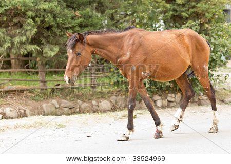 ein Pferd verwundet und müde