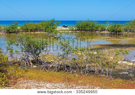 Landscape With Mangrove Plants At Shore Of Island Bonaire