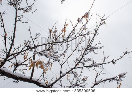 Bare Winter Branches With Ice And Snow