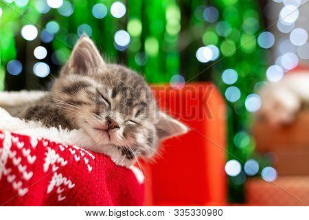 Sleeping Christmas Kitten. Beautiful Little Tabby Sleeping Kitten, Kitty, Cat On Red Knitted Plaid U