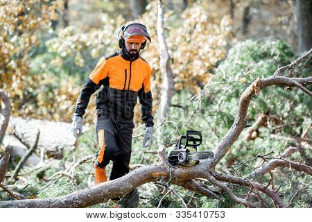 Professional lumberman in protective workwear walking to the felled tree during a logging work with chainsaw in the forest poster