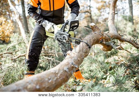 Lumberman In Protective Workwear Sawing Branches With A Chainsaw From A Felled Tree In The Pine Fore