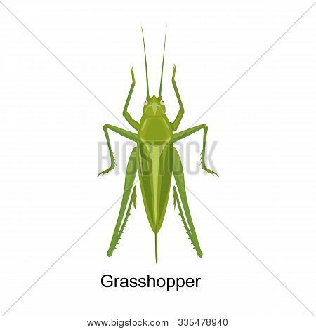 Grasshopper Vector Icon.cartoon Vector Icon Isolated On White Background Grasshopper.