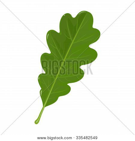 Oak Leaf Vector Icon.cartoon Vector Icoon Isolated On White Background Oak Leaf.