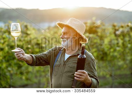 Portrait Of A Senior Well-dressed Winemaker Checking The Wine Quality On The Vineyard During A Sunse