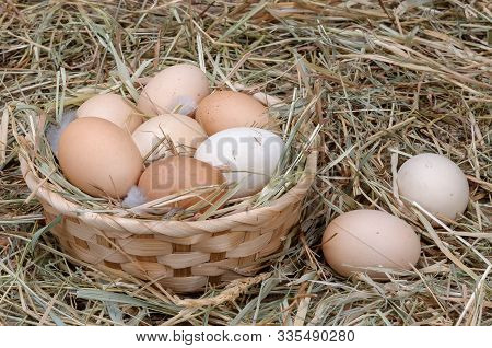 Chicken Eggs Are Stacked In A Basket And Two Eggs Lie Side By Side. Organic Product. Agricultural St