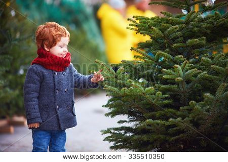 Happy Curious Little Boy Touching The Needles On Spruce At The Christmas Tree Market For Winter Holi
