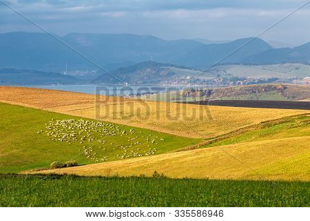 Piedmont Landscape, Flock Of Sheeps On A Meadow In The Morning Light, The Area Of Liptov In Slovakia